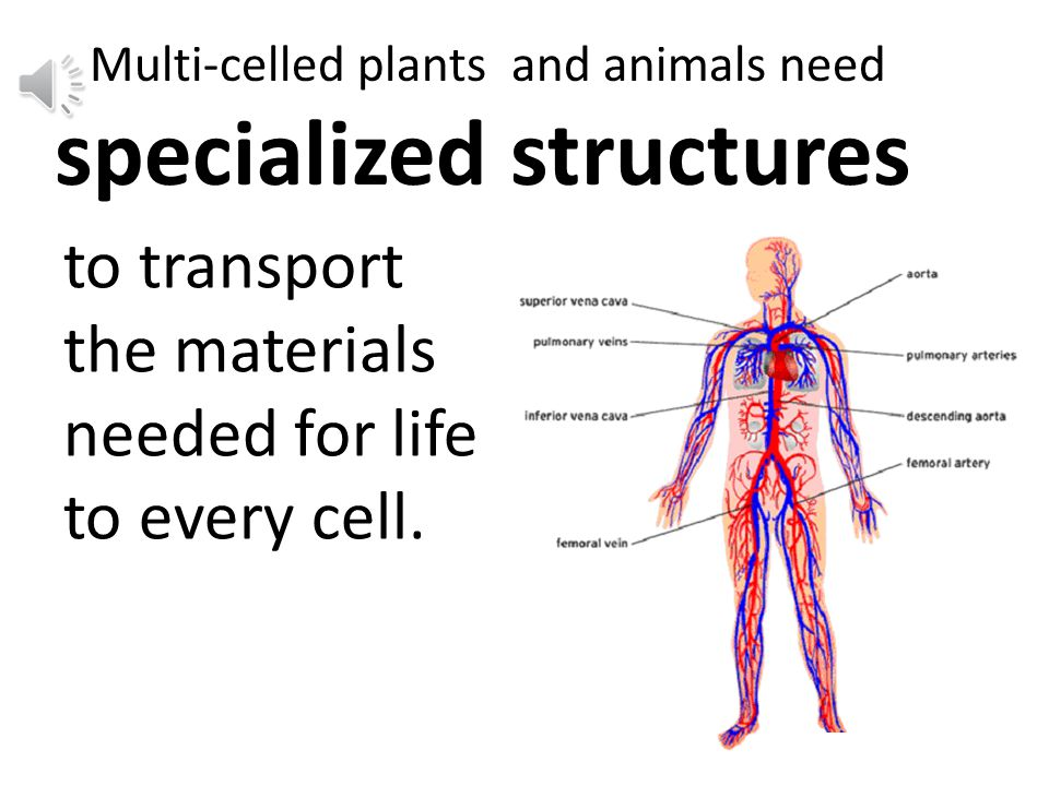 But the cells deep inside a multi-celled organism are surrounded by other cells.