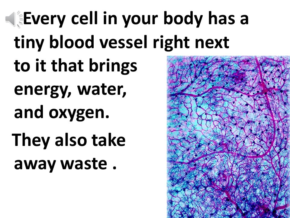 Your blood brings your cells the 4 things they need to live. energy water oxygen waste removal