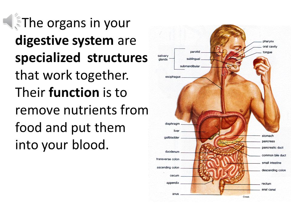 Blood vessels are specialized structures that work together with the heart in the circulatory system.