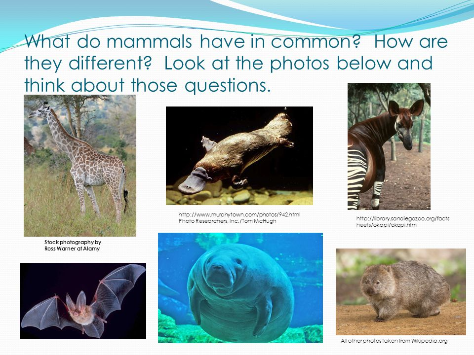 All mammals have similar characteristics.Can you name some.