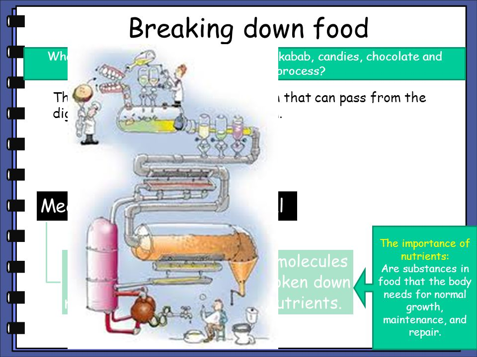 Breaking down food The food will break down into a form that can pass from the digestive tract into the bloodstream. What will happen to food such as