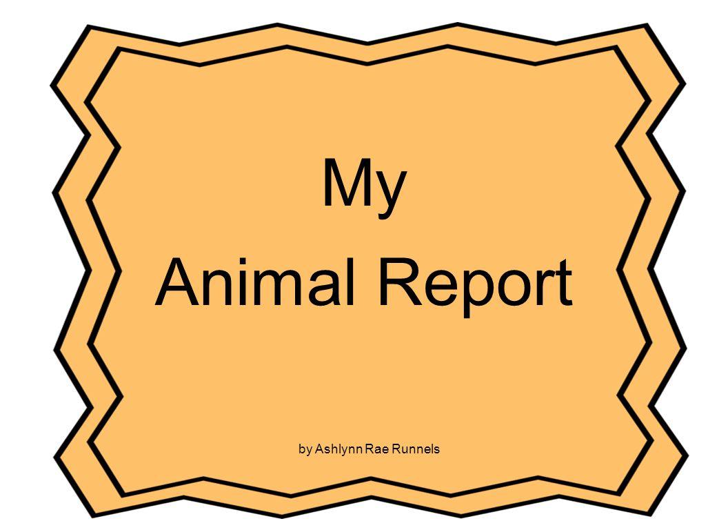 My Animal Report by Ashlynn Rae Runnels