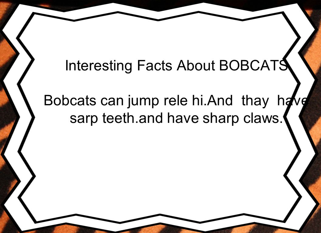 Interesting Facts About BOBCATS Bobcats can jump rele hi.And thay have sarp teeth.and have sharp claws.