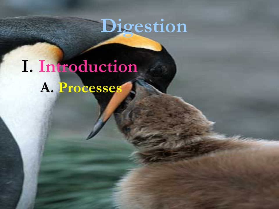 Digestion I. Introduction A. Processes