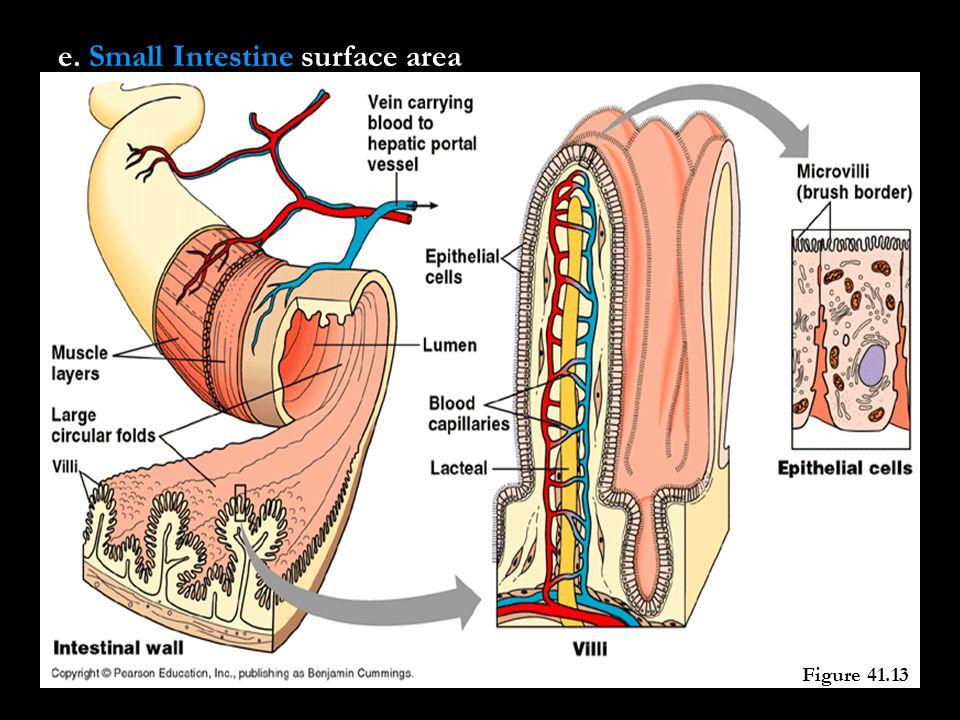 e. Small Intestine surface area Figure 41.13