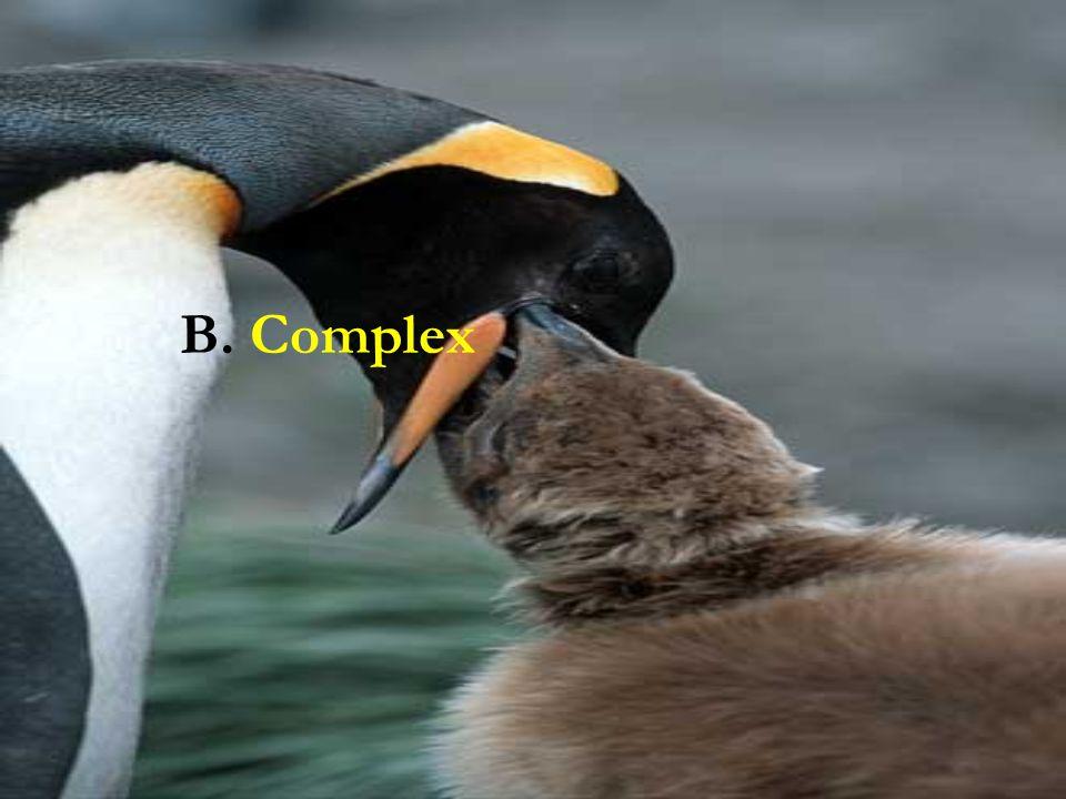 B. Complex