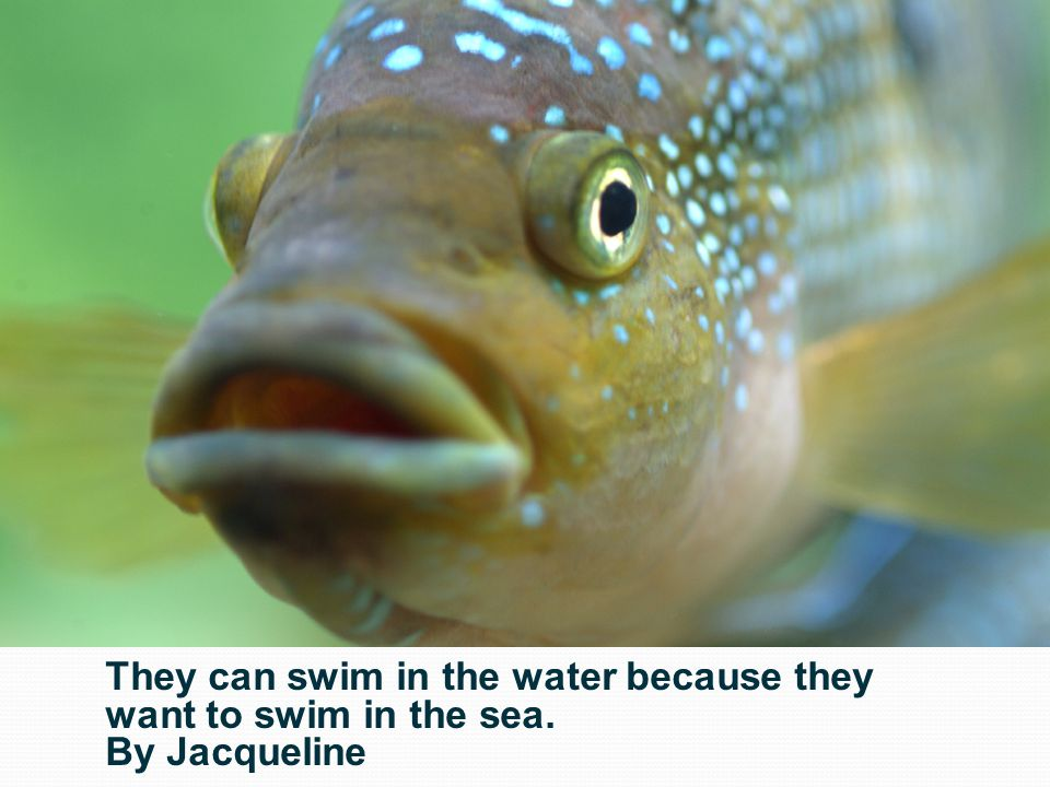 They can swim in the water because they want to swim in the sea. By Jacqueline