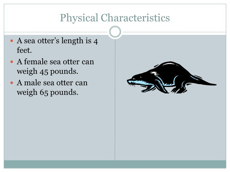 Physical Characteristics A sea otters length is 4 feet.