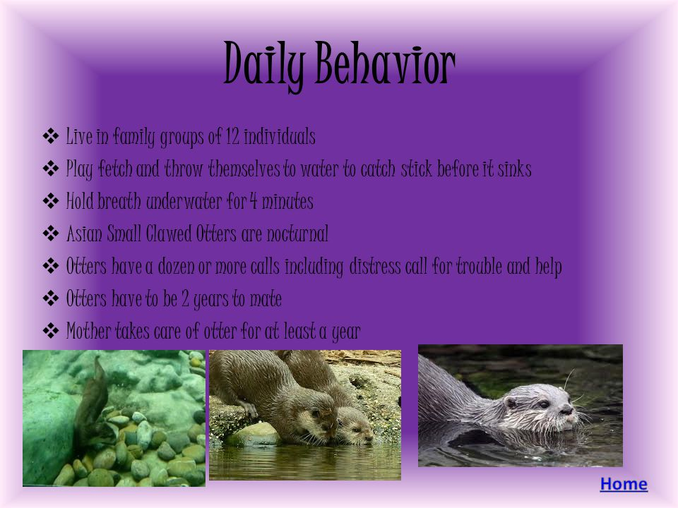 Daily Behavior Live in family groups of 12 individuals Play fetch and throw themselves to water to catch stick before it sinks Hold breath underwater
