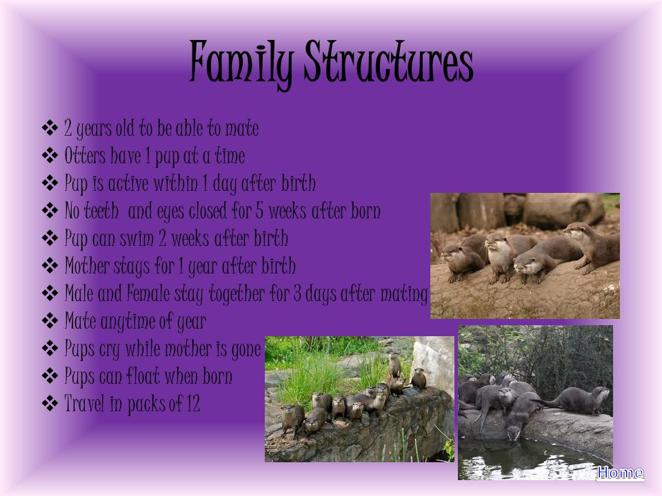 Family Structures 2 years old to be able to mate Otters have 1 pup at a time Pup is active within 1 day after birth No teeth and eyes closed for 5 wee
