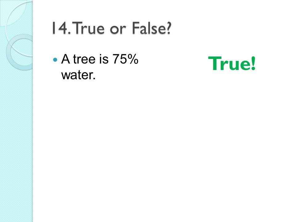 14. True or False? A tree is 75% water. True!
