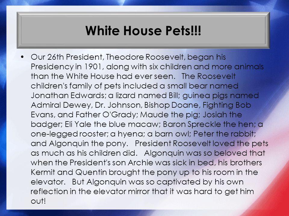 White House Pets!!.