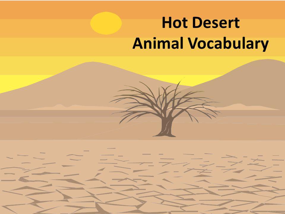 Hot Desert Animal Vocabulary