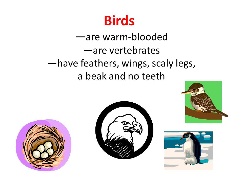 are warm-blooded are vertebrates have feathers, wings, scaly legs, a beak and no teeth Birds