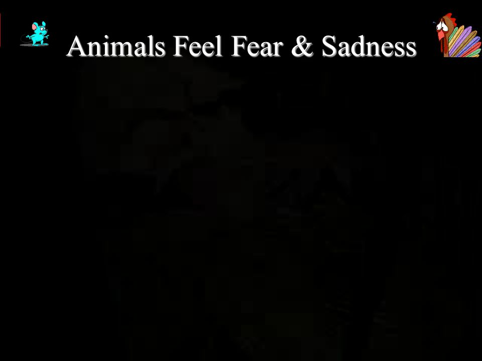 Do you know what goes through the Animals head when its being killed