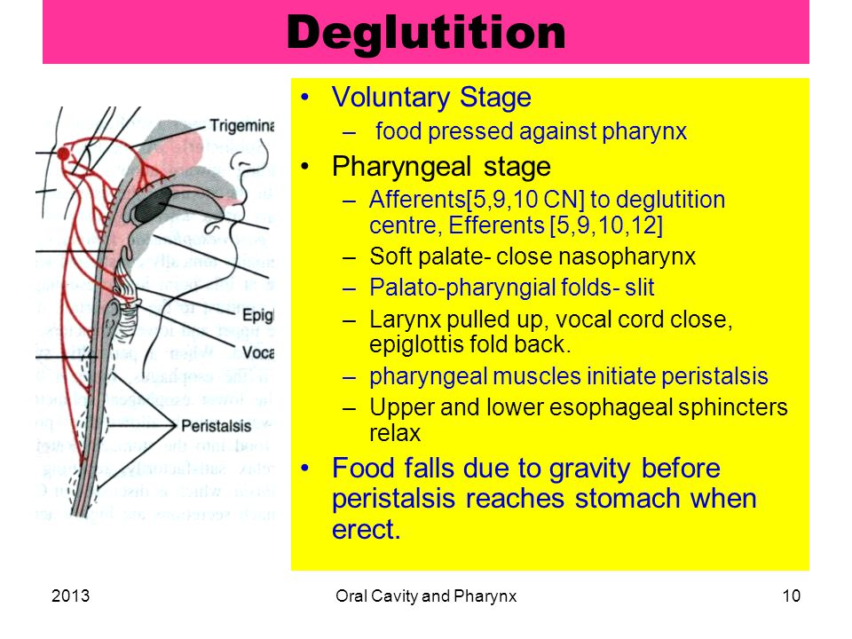 2013Oral Cavity and Pharynx10 Deglutition Voluntary Stage – food pressed against pharynx Pharyngeal stage –Afferents[5,9,10 CN] to deglutition centre, Efferents [5,9,10,12] –Soft palate- close nasopharynx –Palato-pharyngial folds- slit –Larynx pulled up, vocal cord close, epiglottis fold back.