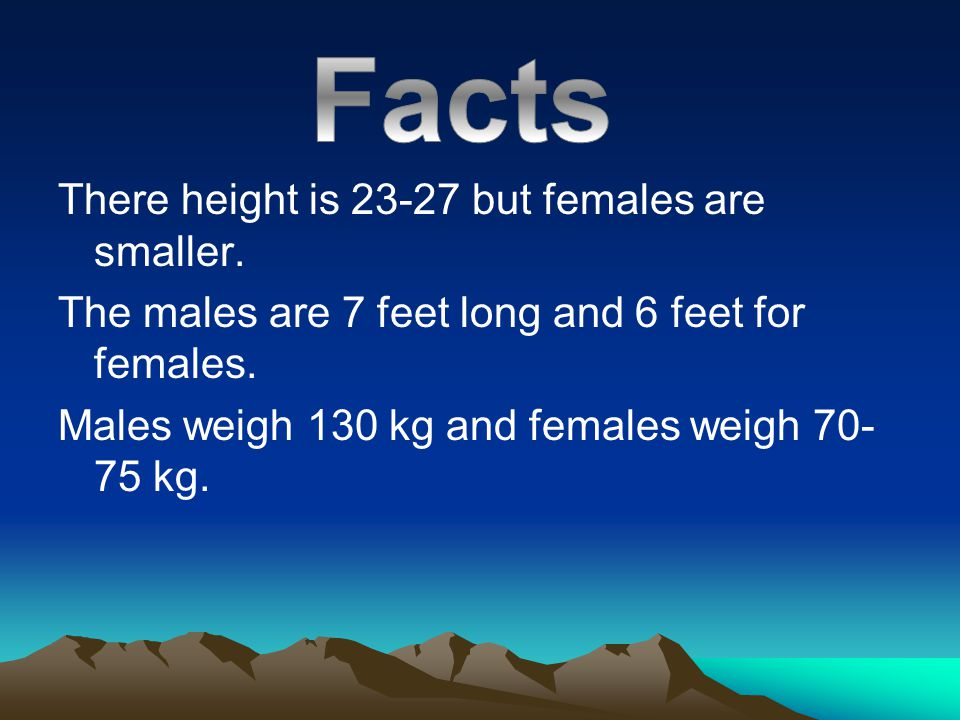 There height is 23-27 but females are smaller. The males are 7 feet long and 6 feet for females. Males weigh 130 kg and females weigh 70- 75 kg.