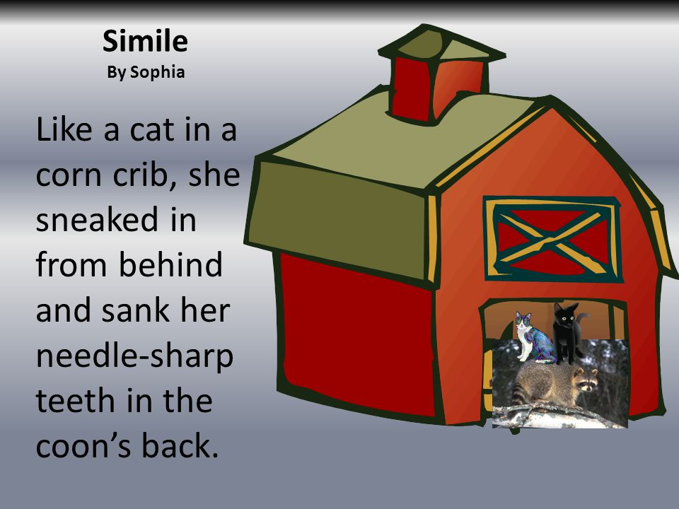 Simile By Sophia Like a cat in a corn crib, she sneaked in from behind and sank her needle-sharp teeth in the coons back.