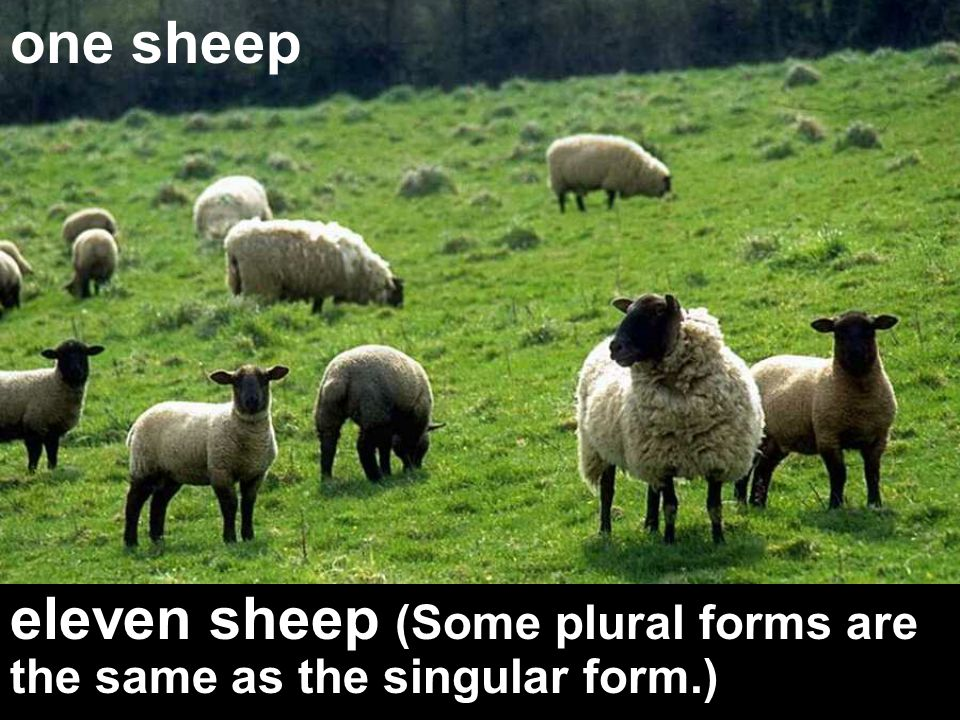 one sheep eleven sheep (Some plural forms are the same as the singular form.)