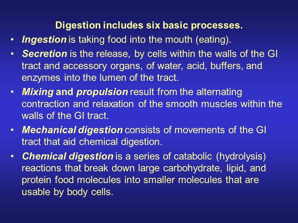 Digestion includes six basic processes.