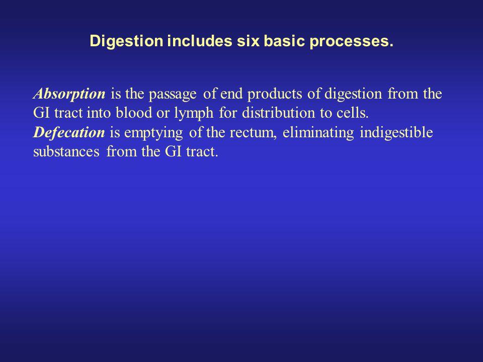 GI Tract Functions : Small Intestine Small Intestine: 2.