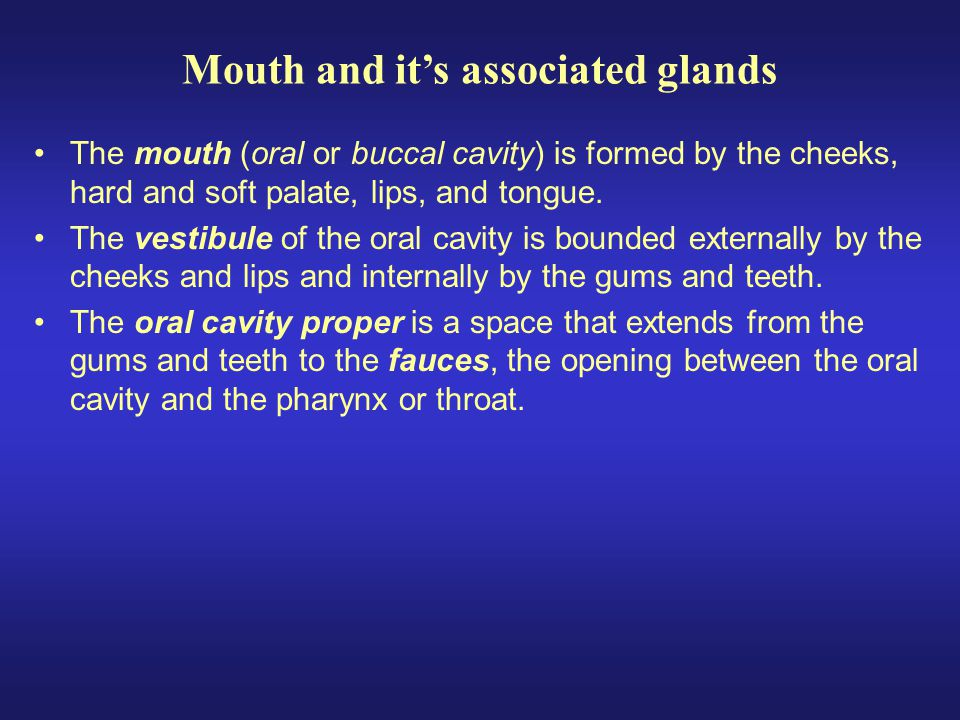 Lips and cheeks contains buccinator muscle that keeps food between upper & lower teeth Vestibule area between lips and teeth Oral cavity proper the roof = hard, soft palate and uvula –floor = the tongue Mouth and its associated glands