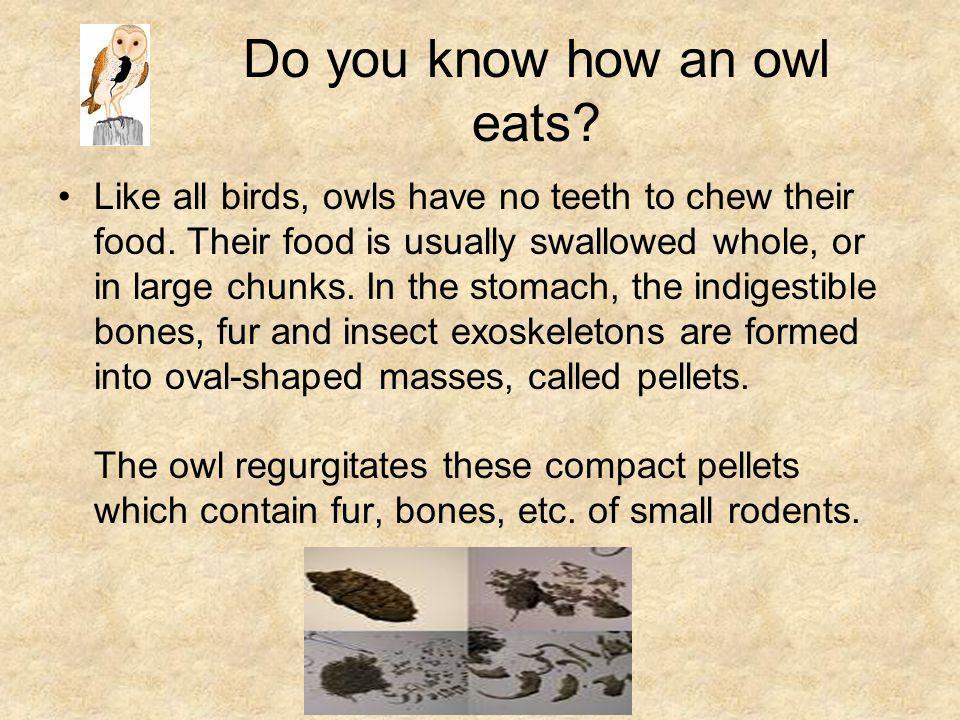 What birds cough up pellets.What are pellets.
