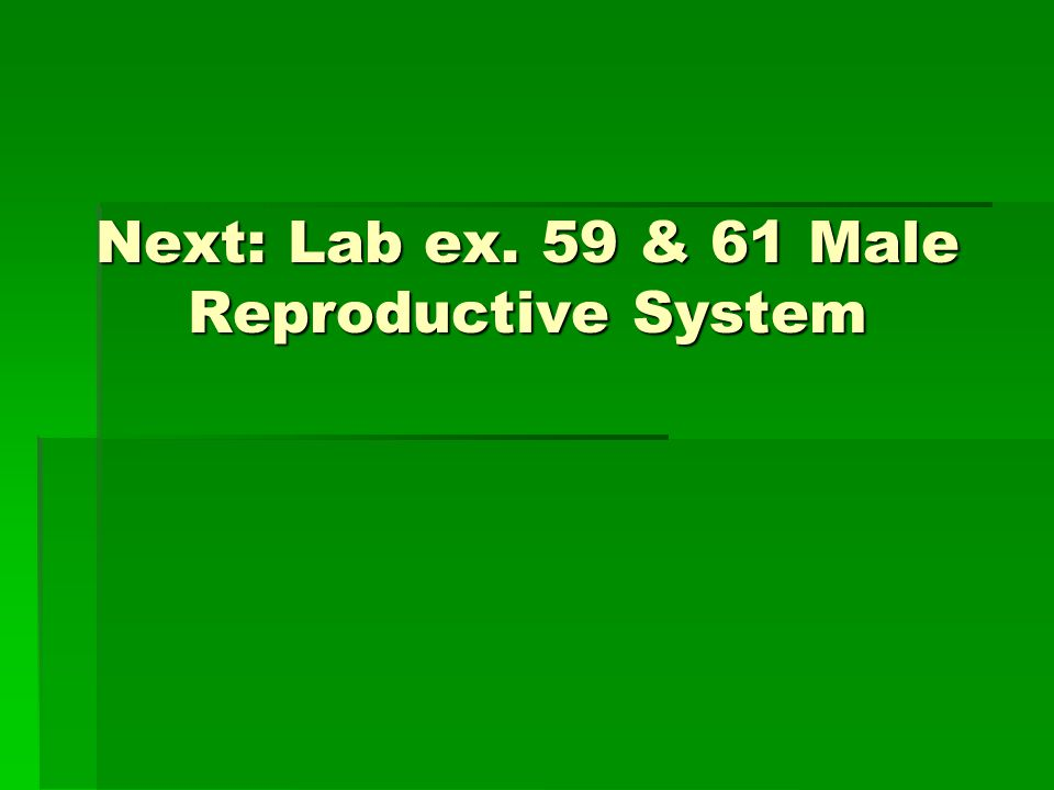 Next: Lab ex. 59 & 61 Male Reproductive System