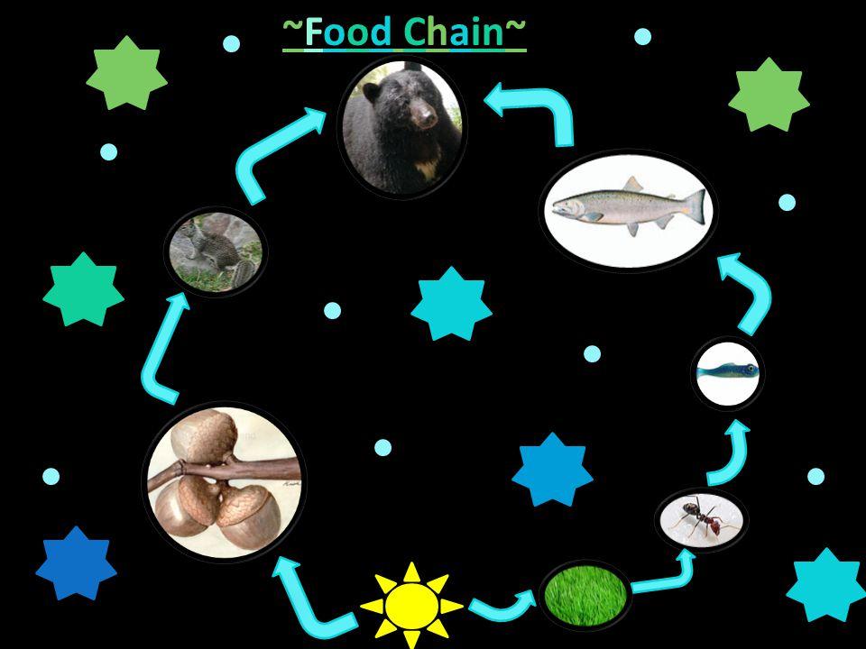~Food Chain~