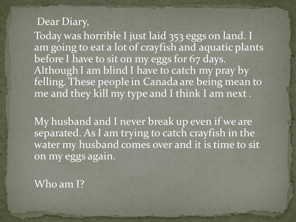 I am a Cassowary by L. B.
