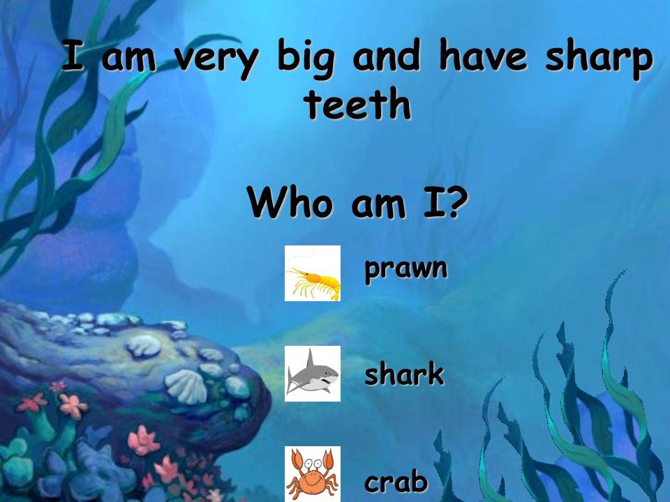 I am very big and have sharp teeth Who am I? prawnsharkcrab