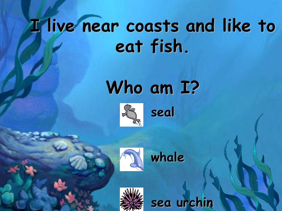 I live near coasts and like to eat fish. Who am I? sealwhale sea urchin