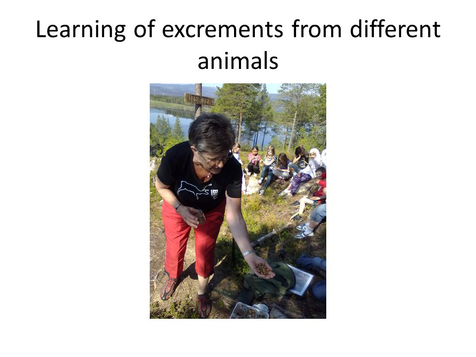 Learning of excrements from different animals