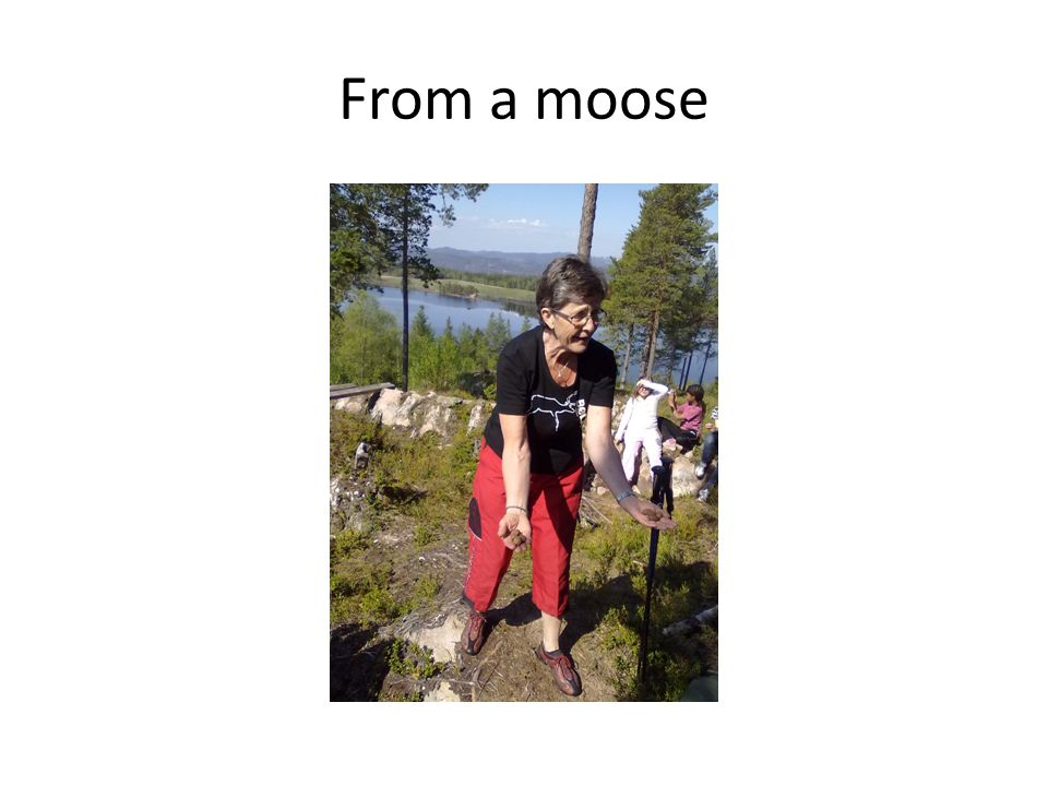 From a moose