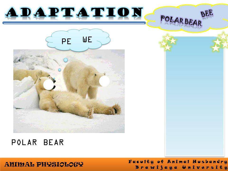 ANIMAL PHYSIOLOGY Faculty of Animal Husbandry Brawijaya University POLAR BEAR PE WE