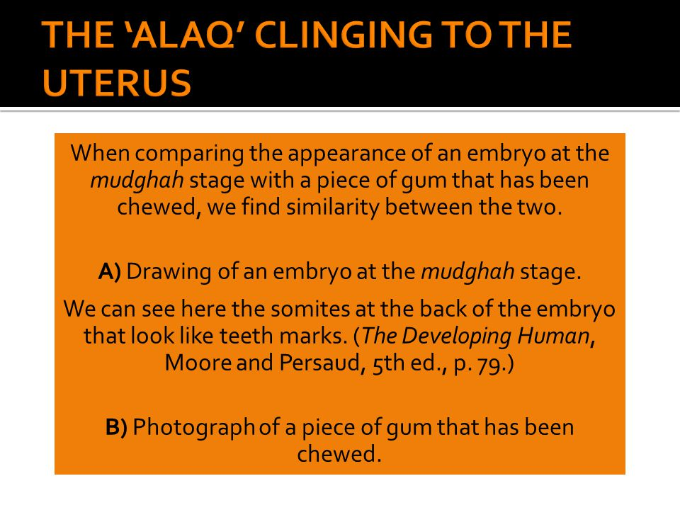 When comparing the appearance of an embryo at the mudghah stage with a piece of gum that has been chewed, we find similarity between the two. A) Drawi