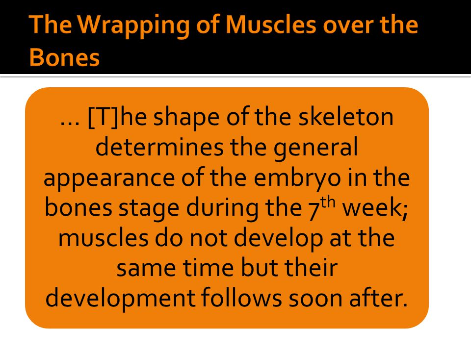 … [T]he shape of the skeleton determines the general appearance of the embryo in the bones stage during the 7 th week; muscles do not develop at the s