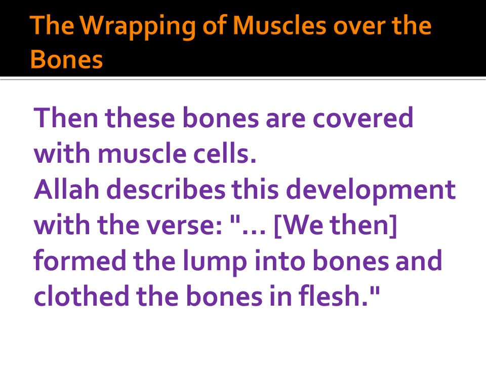 Then these bones are covered with muscle cells. Allah describes this development with the verse: