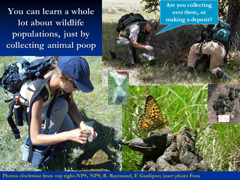 You can learn a whole lot about wildlife populations, just by collecting animal poop Photos clockwise from top right-NPS, NPS, R. Raymond, F. Gardipee