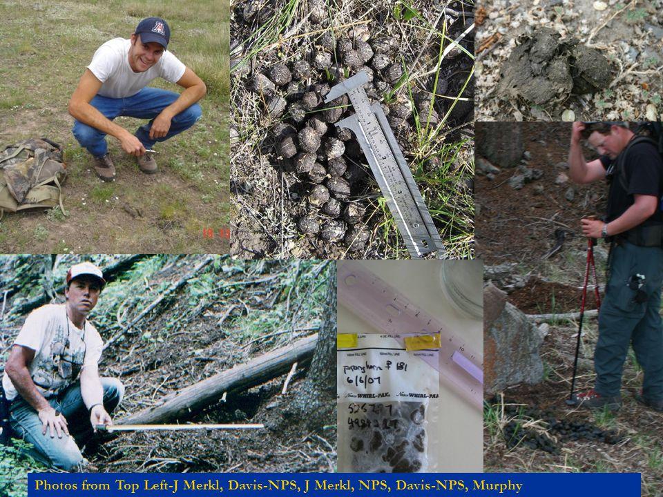 Photos from Top Left-J Merkl, Davis-NPS, J Merkl, NPS, Davis-NPS, Murphy