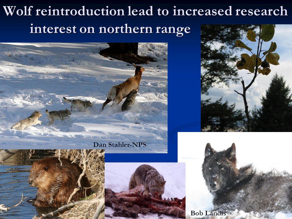 Wolf reintroduction lead to increased research interest on northern range Dan Stahler-NPS Bob Landis