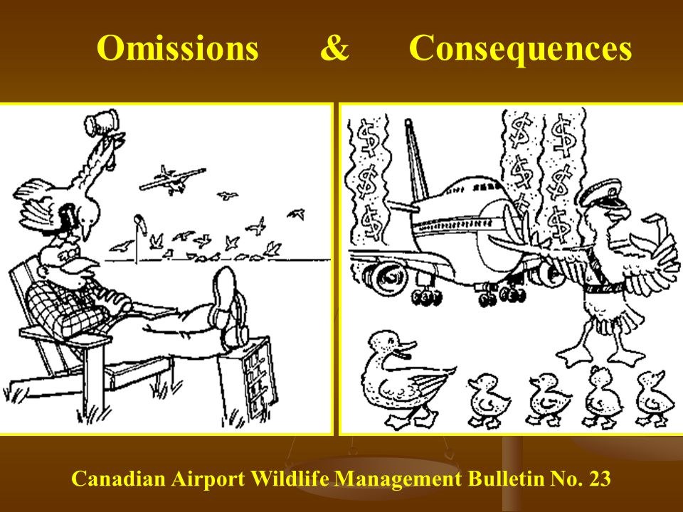 Omissions & Consequences Canadian Airport Wildlife Management Bulletin No. 23