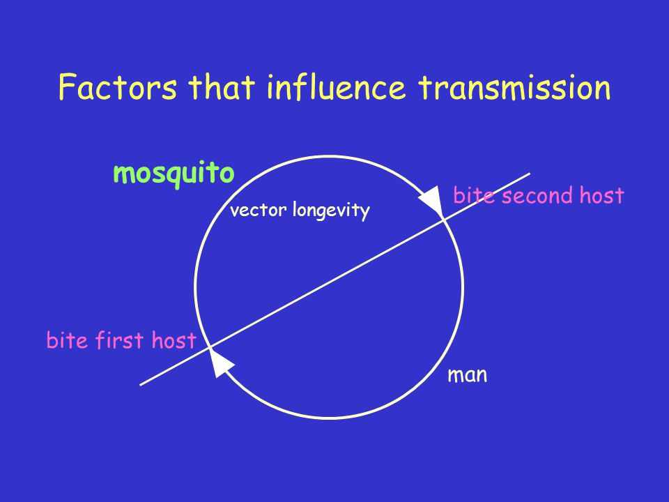 Factors that influence transmission mosquito man bite first host bite second host vector longevity