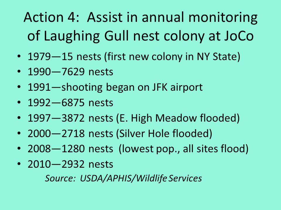 Action 4: Assist in annual monitoring of Laughing Gull nest colony at JoCo 197915 nests (first new colony in NY State) 19907629 nests 1991shooting began on JFK airport 19926875 nests 19973872 nests (E.