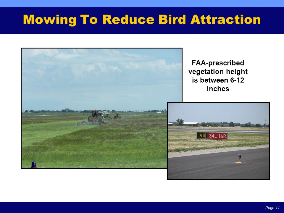 Page 11 Mowing To Reduce Bird Attraction FAA-prescribed vegetation height is between 6-12 inches