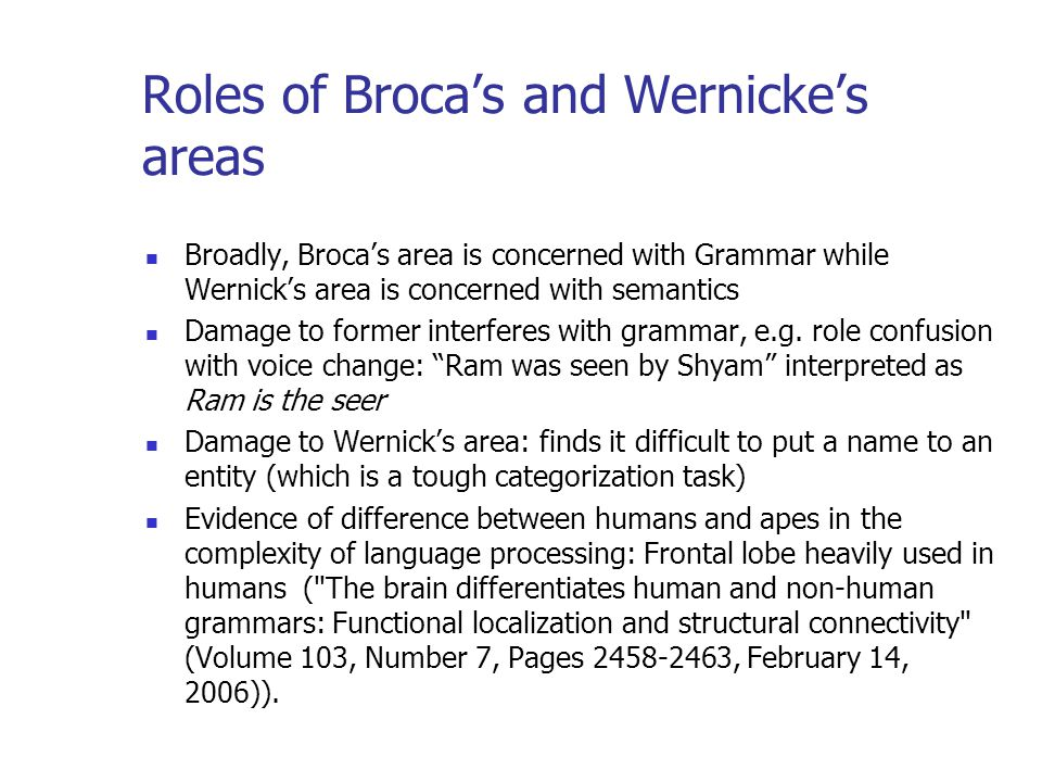 Roles of Brocas and Wernickes areas Broadly, Brocas area is concerned with Grammar while Wernicks area is concerned with semantics Damage to former interferes with grammar, e.g.
