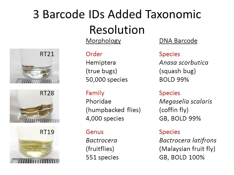 3 Barcode IDs Added Taxonomic Resolution Morphology Order Hemiptera (true bugs) 50,000 species Family Phoridae (humpbacked flies) 4,000 species Genus Bactrocera (fruitflies) 551 species DNA Barcode Species Anasa scorbutica (squash bug) BOLD 99% Species Megaselia scalaris (coffin fly) GB, BOLD 99% Species Bactrocera latifrons (Malaysian fruit fly) GB, BOLD 100% RT19 RT28 RT21