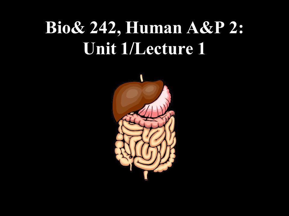 GI Tract Functions : Small Intestine Small Intestine: 2.Jejunum: Middle region of the small intestine, about 1 m (3 to 4 ft) (8 ft in a cadaver due to smooth muscle relaxation) –Completes the digestion of carbohydrates, proteins, lipids, and nucleic acids 3.Ileum: final and longest region of the small intestine, about 2m (6 ft).