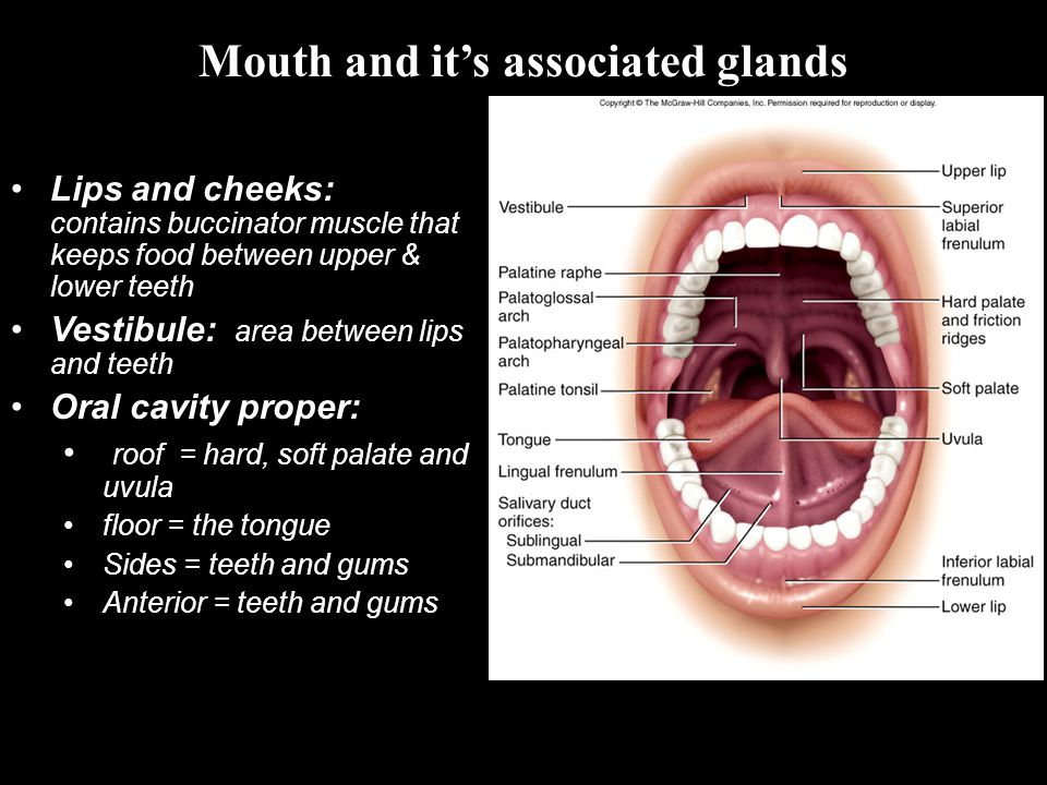 Mouth: Ingestion Teeth: Mastication = Mechanical digestion Salivary Glands: Parotid; Stenson s duct Submandibular; Wharton s duct Sublingual; Rivinus duct Mumps is an inflammation and enlargement of the parotid salivary glands caused by infection with the mumps virus (myxovirus).