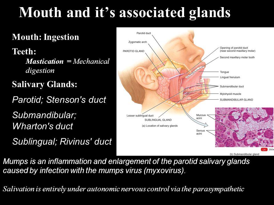 GI tract functions: Small Intestine